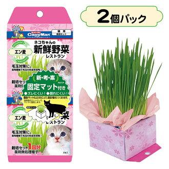 kyatimanneko的新鮮的蔬菜餐廳2個包[供貓草/猫糧/貓使用的零食/貓的零食、貓的點心、貓的零食][貓用品/貓(貓、貓)/寵物·寵物商品/寵物用品][CattyMan]