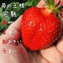 [送料無料]福岡県久留米産 イチゴ あまおう 230g×2