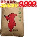 (産地直送)令和元年度産 山形県産 竹田さんの雪若丸 玄米 1袋 20kg