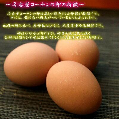 【愛知●尾張】特別価格セット商品!!高級名古屋コーチンの卵(20個入り)+おいしい白卵(20個入り)【送料無料】合計40個入り食品/卵/鶏卵/40個/お得/