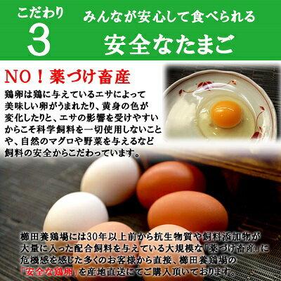【愛知●尾張】高級名古屋コーチンの卵(20個入り)+おいしい白卵(20個入り)【送料無料】合計40個入り食品/卵/鶏卵/40個/お得/