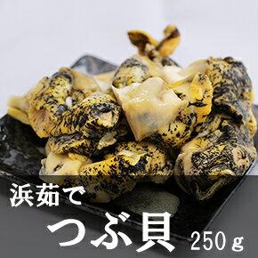 浜茹で つぶ貝(250g)