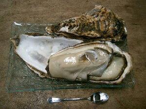 北海道厚岸産 殻付き生牡蠣 生食用 30個入り(105g〜129g)