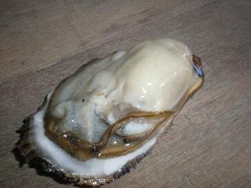 北海道 道東厚岸産の新鮮 特大 殻付活牡蠣(130g〜150g)30個 生食対応可