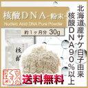 〓送料無料〓《国産・高純度》『 核酸DNA 30g(粉末タイプ)』合成品不使用!!【国産】天然の鮭(さけ)白子由来核酸DNA含有量90%以上!!【HLS_DU】【RCP】【あす楽_土曜営業】【05P03Dec16】