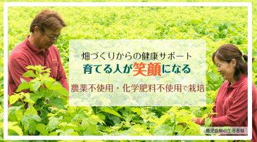 2個セット20%オフ 送料無料 有機JAS認証の桑葉青汁 1.5g×60包 120包 鹿児島県産100% 糖質が気になる方の食事のお供に 有機栽培・化学肥料不使用 桑茶粉末タイプ
