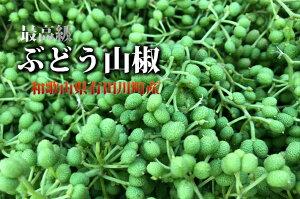 花山椒(雄花)和歌山県産約50g【予約4月中旬以降発送】ぶどう山椒花さんしょ