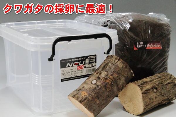 コンテナ・クワガタ採卵セット