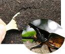 ♀は爆産!カブトムシ幼虫がプリッと大きく育つ!★カブトムシ用の土!カブトマット!【ガス抜...