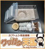 ◆オオクワガタ専用:産卵初めてセット※成熟した国産オオクワガタを入れるだけ!!