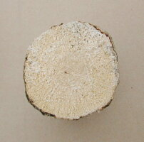ナラ材7-12cm産卵用