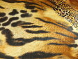 現品限り ストレッチサテン生地 布 動物柄 アニマル柄 アニマルハンター 170374スカート ワンピース 舞台衣装 ハロウィン クリスマス 発表会 学園祭 文化祭 運動会 コンサート パーティー 商用利用可能10P03Dec16