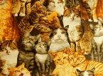 生地 布 USAコットン ロバートカフマン CAT CRAZY キャットクレイジー ネコ 猫 AVT15811−205 ROBERT KAUFMAN ロバートカウフマン 商用利用可能