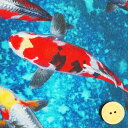 シーチング生地 布 錦鯉 ニシキゴイ 池 DPJ−085−A インクジェットプリント 商用利用可能