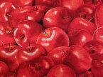 C5841 輸入 USAコットン 生地 布 レッドアップル C5841-Red Red Apples 赤リンゴ 赤りんご タイムレストレジャーズ 商用利用可能