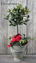 【クリスマスの寄せ植え】季節の寄せ植え/X'mas/季節の花苗/鉢植え[100-3013-5]プロの寄せ植え/プレゼント/誕生日/母の日/父の日/ギフト/お祝い/贈り物/おしゃれ/かわいい/ファイバーストーン(194-932LL-77)