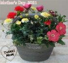 【寄せ植え】季節の寄せ植え/季節の花苗/鉢植え[100-3016-4]プロの寄せ植え/プレゼント/誕生日/母の日/父の日/ギフト/お祝い/贈り物/おしゃれ/かわいい/ファイバーストーン(194-725M-78s)