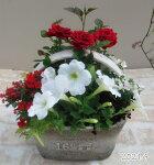 【寄せ植え】季節の寄せ植え/季節の花苗/鉢植え[100-3014-3]プロの寄せ植え/プレゼント/誕生日/母の日/父の日/ギフト/お祝い/贈り物/おしゃれ/かわいい/ファイバーストーン(194-944S-92)