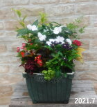 【寄せ植え】季節の寄せ植え/季節の花苗/鉢植え[100-3013-11]プロの寄せ植え/プレゼント/誕生日/母の日/父の日/ギフト/お祝い/贈り物/おしゃれ/かわいい/ファイバーストーン(194-484LM-71s)