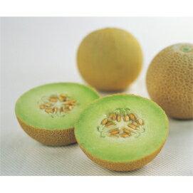 ☆ ころたん ☆ 一般の方でも育てやすい「食味の良さ」「収穫量の多さ」を実現した新品種で...