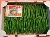 京都中央卸売市場中西青果仲卸直送だから新鮮!京野菜仲卸中西青果店主厳選最高品伏見甘長とうがらし1kg(一般的に辛くなく甘みのあるとうがらし)ふしみあまながとうがらし、伏見唐辛子、伏見とうがらし
