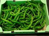 京都中央卸売市場中西青果仲卸直送だから新鮮!京野菜極上品訳あり伏見甘長唐辛子1kg曲がり 大きさ不揃い ふしみあまながとうがらし(一般的に辛くなく甘みのあるとうがらし)、伏見唐辛子、伏見とうがらし