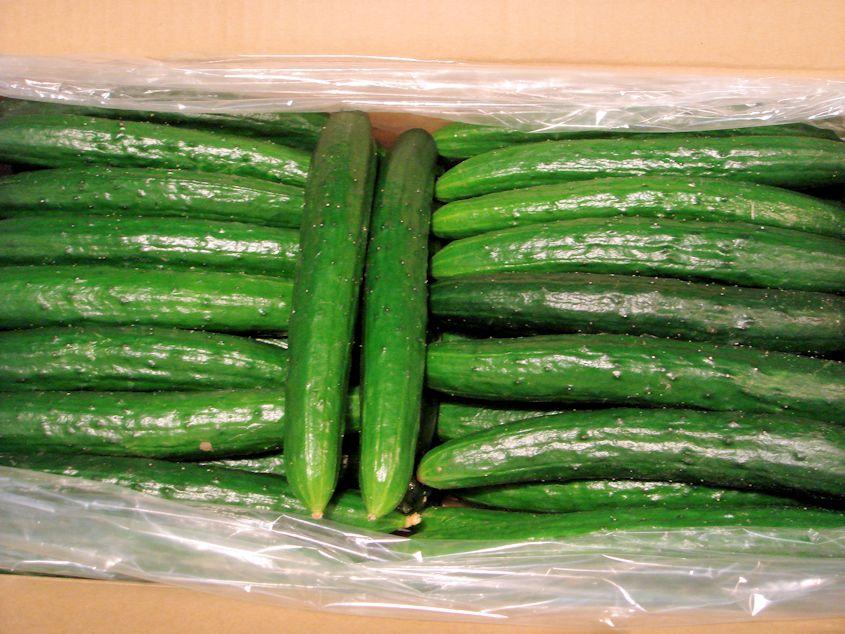 京都産 美味しい胡瓜 5kg(45~ 60本入)