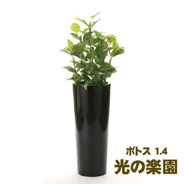 ●代引き不可光の楽園 (724A550-20) ポトス 1.4 93688:京都のちょっとセレブなお店R店