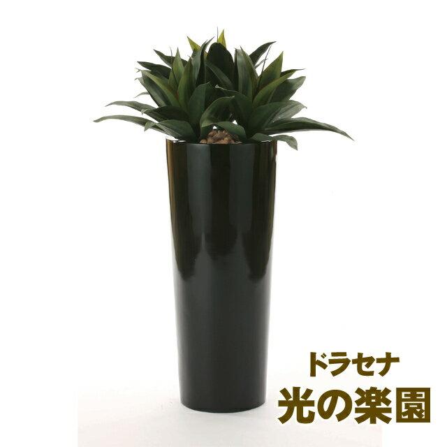 ●代引き不可光の楽園 (726A600-20) ドラセナ 93691:京都のちょっとセレブなお店R店
