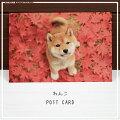 可愛らしい子犬たちの姿を情緒あふれる秋の景色と共にお届けしますわんこポストカード・秋紅葉