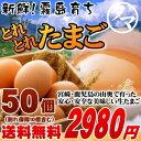 【送料無料】九州育ちの絶品たまごこだわり新鮮なとろ~りたまご品質・衛星すべてHACCP管理された安心・安全なたまごビタミンEは一般卵のなんと10倍の美味しく栄養もたっぷり♪【生卵/タマゴ/たまご】