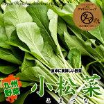 九州で育てた無農薬栽培の小松菜