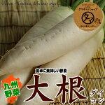 宮崎の大地で育った美味しい大根