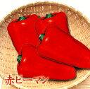 赤ピーマン (3〜5個入り)