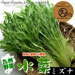 無農薬栽培の宮崎産水菜