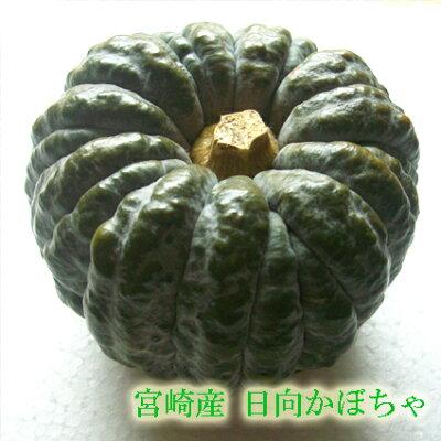 宮崎県産かぼちゃ★【宮崎産 新鮮野菜】!宮崎産日向かぼちゃ(黒皮かぼちゃ)