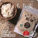 【送料無料】もち麦250g (国産・無添加・令和元年度産)もっちりプチプチとした食感と食物繊維を豊富に含んでいるのが特徴です。高タンパク、高ミネラルで、β-グルカンという食物繊維は白米に比べ20倍以上!国産もち麦 遺伝子組み換えなし もち麦ごはん もち麦