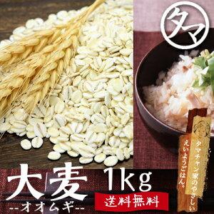 """いちオシ""""大麦""""がスゴイ!精白米の17倍以上の食物繊維。水溶性・不溶性食物繊維バランス食材..."""