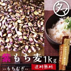 超レア食材!【送料無料】超希少な紫もち麦1kg(福岡県産)紫が濃い状態で収穫したもち麦です。も…