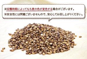 【送料無料】もち麦1kg(国産・無添加)もっちりプチプチとした食感と食物繊維を豊富に含んでいるのが特徴です。高タンパク、高ミネラルで、β-グルカンという食物繊維は白米に比べ20倍以上!【国産もち麦/国産】【遺伝子組み換えなし】