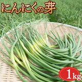 【期間限定】【4月26日頃より順次発送】 にんにくの芽 1kg にんにくの芽 福岡 九州 国産 【送料無料】