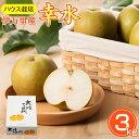 【予約販売】【送料無料】 大川三世代 温室幸太郎 3kg 幸...