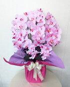 【胡蝶蘭鉢植え・5本立/ライトピンク】(※先端まで花が付いています)アーティフィシャルフラワー「造花」の光触媒コーティング