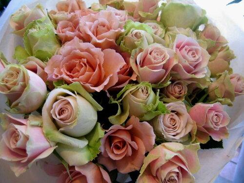 ローズ・ローズ・ローズ花束■花 アレンジメント 花束 ローズ ばら 薔薇 記念日 結婚祝い ...