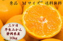 三ケ日みかん10kg 早生みかん ブランドみかん 秀 M サイズ 静岡県産 10kg 業務用 シェア用 贈答品用 お歳暮 送料無料 訳ありではありません