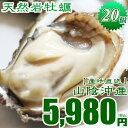 天然岩牡蠣! 食べ応えあり!!20個入牡蠣 カキ 天然岩牡蠣(活)300g前後 ×20個 鳥取産 朝採れ(岩ガキ/岩がき)刺身用 !