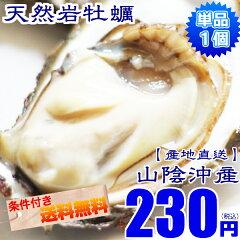 天然岩牡蠣!25個以上ご購入で送料無料牡蠣 カキ 天然岩牡蠣(活)150g〜200g前後 鳥取産 朝採れ ...