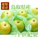 鳥取県産二十世紀梨(ご贈答用)3kg詰梨(6〜8玉前後入)赤秀送料無料