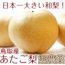 鳥取県産最高級(赤秀)あたご梨愛宕梨5玉超特大5kg有機栽培減農薬送料無料