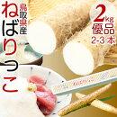 鳥取特産ねばりっこ新物山芋長芋優品(ご自宅用)約2kg2-3本入鳥取県ブランド送料無料